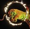 Цирки в Бабушкине