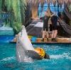 Дельфинарии, океанариумы в Бабушкине